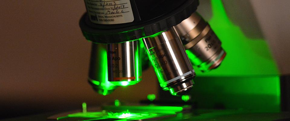Renal-Basic-Research-Microscope
