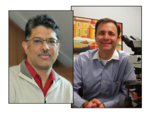 Sanjay Jain and Joseph Gaut, Co-authors of Newly Released Diagnostic Pathology: Kidney Diseases Book